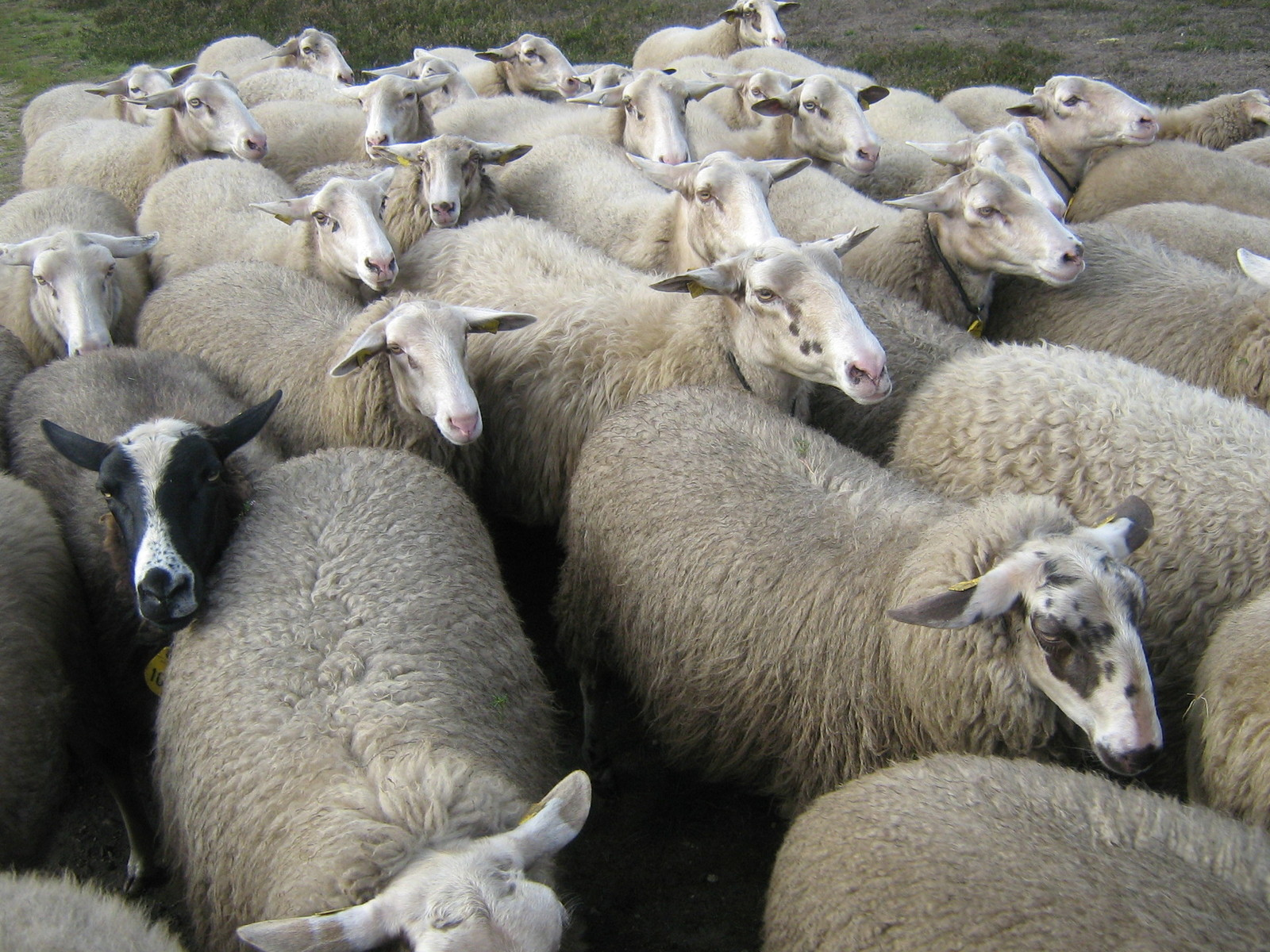 "How ""Herd-Think"" Kills Success"