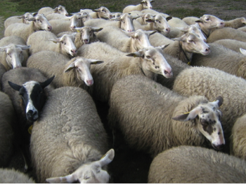 "How ""Herd-Think"" Kills Successful Leadership"