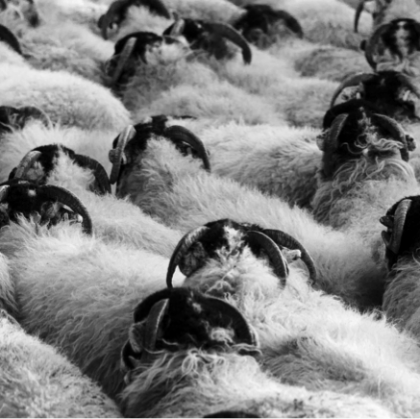 Fast-Forward Leadership Means Not Being Swayed By Herd-Think